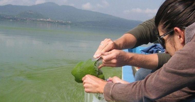 cách quản lý tảo trong ao nuôi tôm